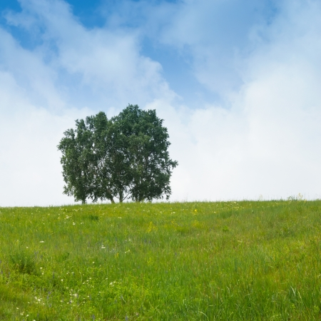 peacefulness: solitary tree on grassy hill and blue sky with clouds in the background Stock Photo