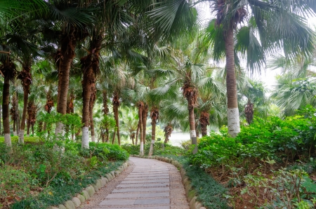 Palm trees Sen in Yangshuo, China photo