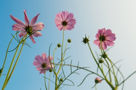 Aster in the blue sky photo
