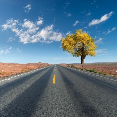 A tree Hu Yangshu beside the highway photo