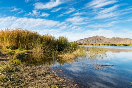 Reeds and lake in  the autumn photo