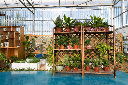 An new greenhouse with bedding plants