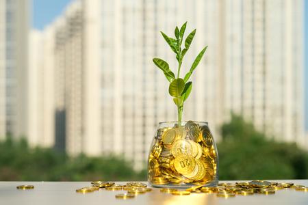 Piante piantate in vaso di vetro oro