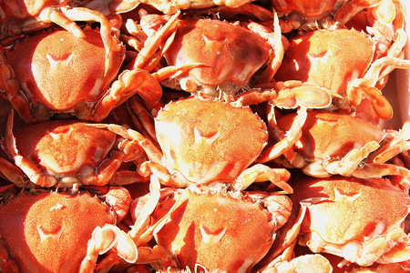 Small red crabs lie in three rows. Seafood.