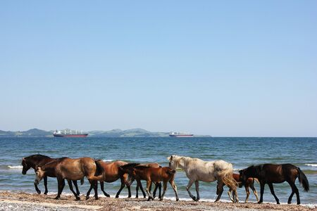 Horses walking along the coast. Seascape with animals.