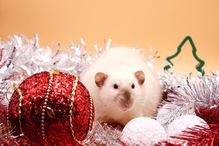 Rat among Christmas toys . Happy New year 2020. Chinese horoscope. year of rat. Archivio Fotografico