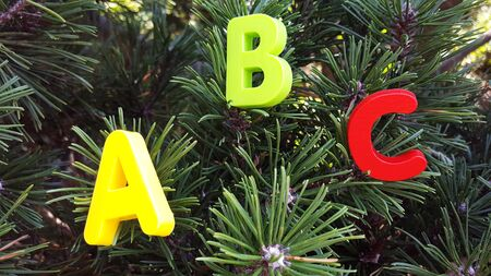 Colored ABC-the first letters of the English alphabet are located on the branches of spruce