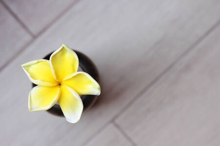 Tropical yellow frangipani flower on grey background. Top view. Copy space.