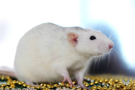 Rat is the Symbol of the year 2020 among Christmas beads. Symbol of the year 2020. Happy New year. Stok Fotoğraf - 131434405
