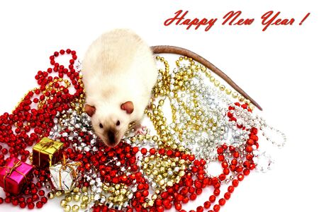 New year 2020. Symbol of the year of the rat. Rat sitting among the Christmas decorations.