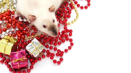 The rat is a symbol of The new year 2020. Rat sitting among the Christmas decorations. Stok Fotoğraf - 131434410