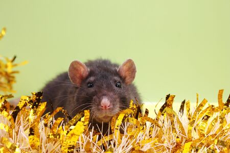 The rat is a symbol Of the new year 2020. Happy New year 2020. Chinese calendar. year of rat.