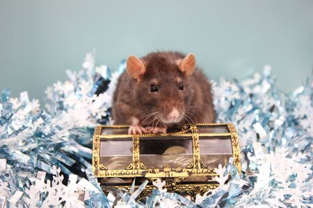 Black Rat and a box of coins . Happy New year 2020. Chinese calendar. year of rat.
