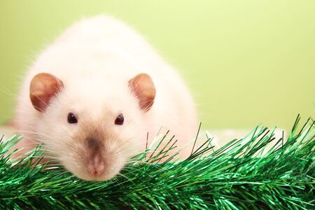The rat is a symbol Of the new year 2020. Happy New year 2020. Chinese calendar. year of rat. Stok Fotoğraf - 132360750