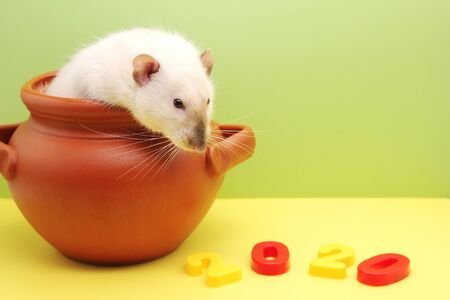 Rat in a clay pot and new years figures 2020. A rat looks out of a clay pot and looks at the colored numbers of the new year 2020. Happy New year. Stok Fotoğraf - 132360754