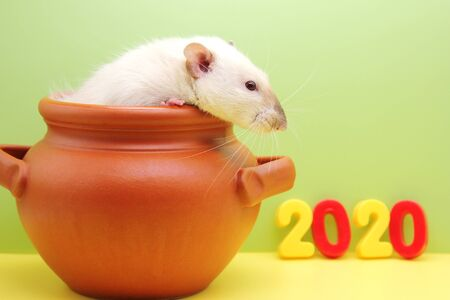 Rat in a clay pot and new years figures 2020. A rat looks out of a clay pot and looks at the colored numbers of the new year 2020. Happy New year. Stok Fotoğraf - 132360759