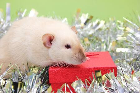 The rat is a symbol of the new year 2020 on a red gift box among shiny tinsel. New year mood. Christmas card. Happy New Year. Stok Fotoğraf - 132360760