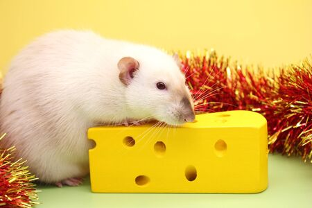 Decorative rat and toy cheese. The rat is a symbol Of the new year 2020. Happy New Year. Stok Fotoğraf - 132922481