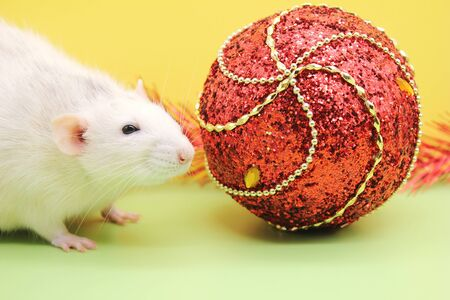 Rat and the Christmas toy. Happy New year. year of rat 2020. Chinese calendar. Stok Fotoğraf - 133454006
