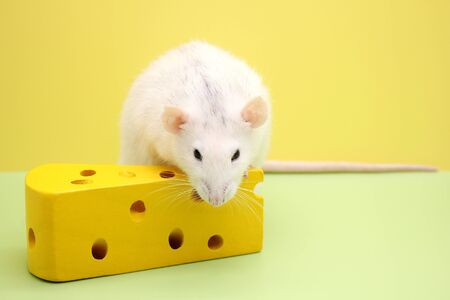 Decorative rat and toy cheese. The rat is a symbol Of the new year 2020. Happy New Year. Stok Fotoğraf - 133454008
