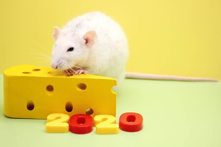 2020 New year number and the decorative rat with a toy cheese. The rat is a symbol Of the new year 2020. Happy New Year. Stok Fotoğraf - 133454009