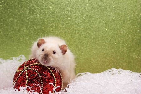 Rat and the Christmas toy. Happy New year. year of rat 2020. Chinese calendar. Stok Fotoğraf - 133454088