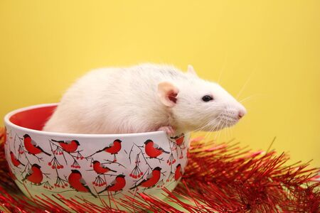 Decorative white rat sitting in a Christmas plate. Symbol of The new year 2020. Happy New year . Chinese calendar. year of rat. Stok Fotoğraf - 133454532
