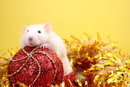 Rat and the Christmas toy. Happy New year. year of rat 2020. Chinese calendar. Stok Fotoğraf - 133454533