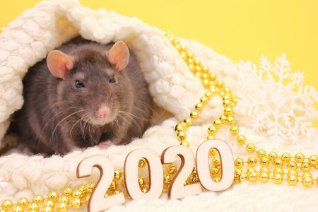 The rat is a symbol Of the new year 2020. Happy New year 2020. Chinese calendar. year of rat. Stok Fotoğraf - 133454536