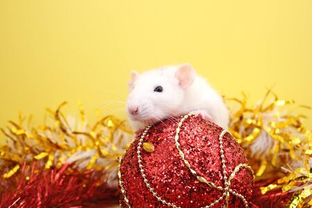 Rat and the Christmas toy. Happy New year. year of rat 2020. Chinese calendar. Stok Fotoğraf - 133454537