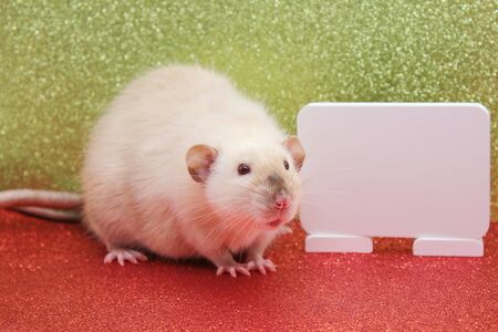 The rat is a symbol Of the new year 2020. White plate for writing your text Stok Fotoğraf - 133454541