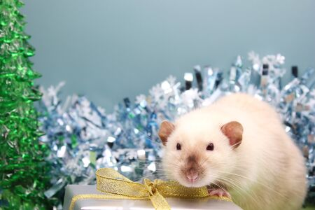 rat among the tinsel near the gift. The concept of the New year 2020. Happy New Year. Stok Fotoğraf - 133454543
