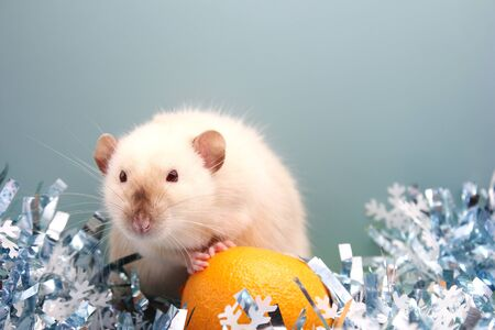 Rat and the tangerine. The rat is a symbol of the new year 2020 in the Chinese calendar. Stok Fotoğraf - 133454544