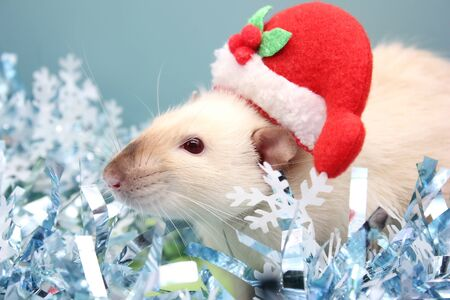 A rat in a Christmas hat among the Christmas tinsel. Happy New year. year of rat 2020 in the Chinese calendar. Stok Fotoğraf - 133454548