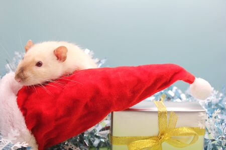 A rat with the Christmas hat and the gift. The concept of the New year 2020. year of rat 2020 in the Chinese calendar.