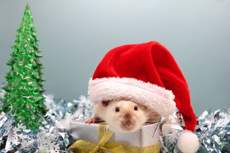 A rat in a Christmas hat with the gift on the Christmas tinsel. New year tree. The concept of the New year 2020. year of rat 2020 in the Chinese calendar. Stok Fotoğraf