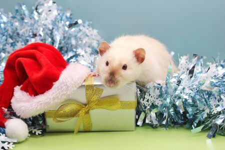 A rat with the the gift and the Christmas hat on it . The concept of the New year 2020. year of rat 2020 in the Chinese calendar. Stok Fotoğraf