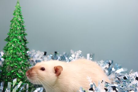White rat among the Christmas tinsel. Happy New year. year of rat 2020 in the Chinese calendar.