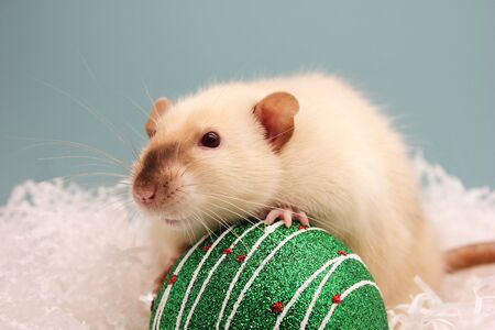 Rat and the Christmas toy. Happy New year. Year of rat 2020 in the Chinese calendar. Stok Fotoğraf