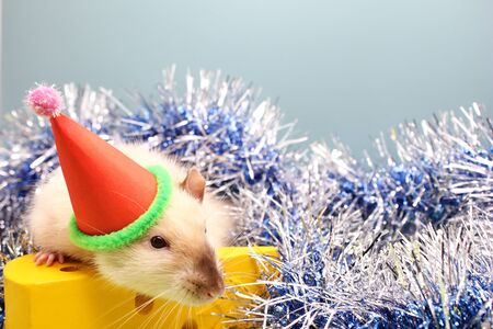 Decorative rat in a Christmas hat and toy cheese. The rat is a symbol Of the new year 2020. Happy New Year.