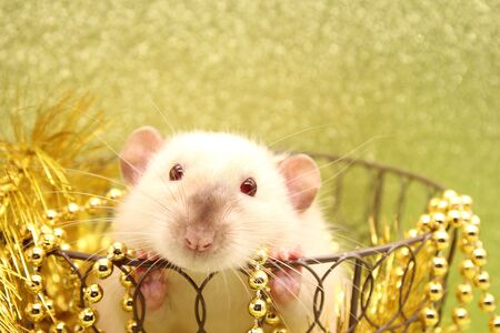 The rat is a symbol of the new year 2020. Gold tinsel and Christmas beads.