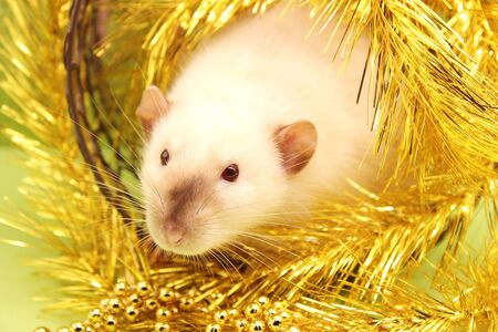 The rat is a symbol of the new year 2020 according to the Chinese calendar. Gold tinsel and Christmas beads.