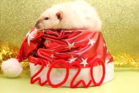 Number 2020 and a Christmas hat with a rat on it. Happy New year.