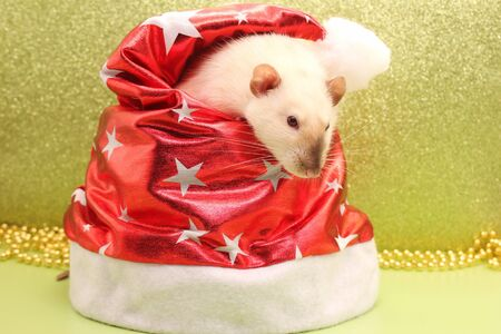 A rat and a Christmas hat. Happy New year to 2020. The rat is a symbol Of the new year 2020 according to the Chinese calendar.