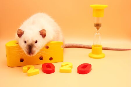 2020 the number of the New year near a rat with a toy cheese and hourglass. The new year is coming. The rat is a symbol of the new year 2020. Happy New Year. Chinese calendar.