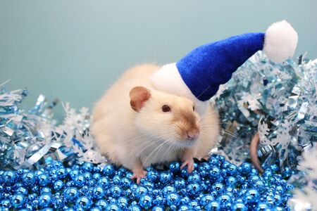 White rat in a blue Christmas hat among a blue Christmas tinsel and blue Christmas beads. Color of the year 2020. year of rat 2020 in the Chinese calendar. Symbol of The new year 2020.