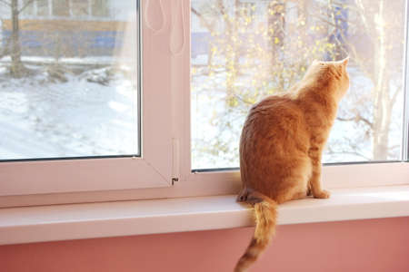 A red cat is sitting on the windowsill and looks out at the first snow. A pet with its back to the camera. Stok Fotoğraf