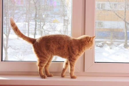 Red cat is walking on the windowsill and looking out the window. There is snow outside the window. Stok Fotoğraf