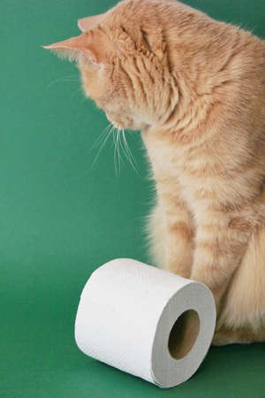 A red cat is sitting with his back turned next to a roll of white toilet paper on a green background. Concept of economic crisis during the coronavirus pandemic.