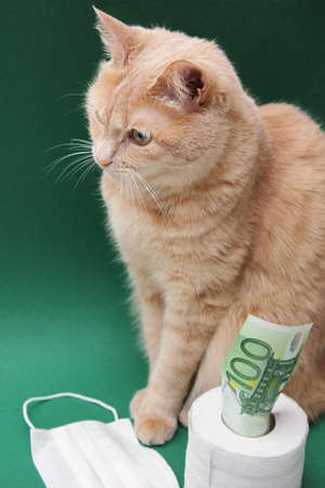 A red cat is sitting next to a roll of white toilet paper on a green background. A 100 Euro bill is sticking out of a roll of toilet paper. A medical disposable face mask is lying nearby.